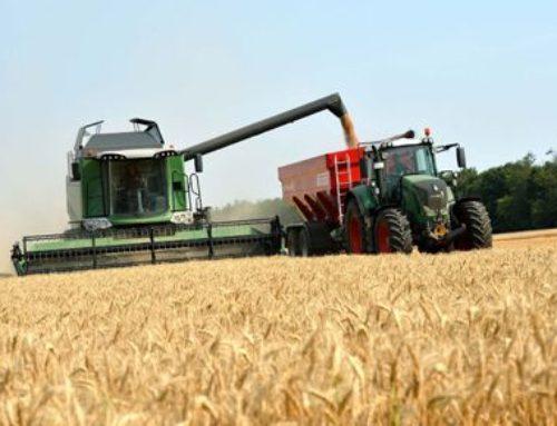 Estiman ingresos de U$S 4.400 millones por la campaña récord de trigo