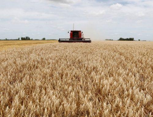 Se recuperaron las exportaciones de harina de trigo (…)