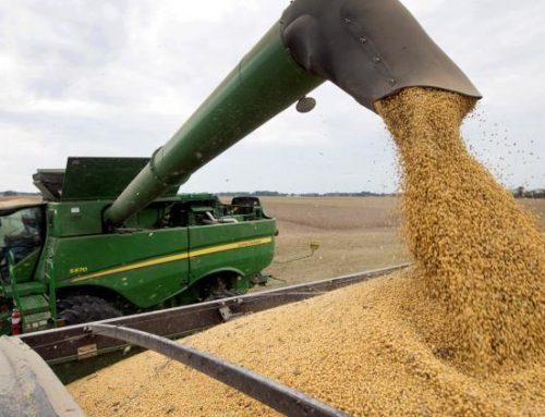 Los productores tienen soja sin vender por U$S 8.400 millones
