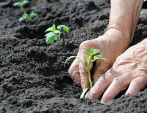 Las Buenas Prácticas Agropecuarias pisan fuerte en 2018