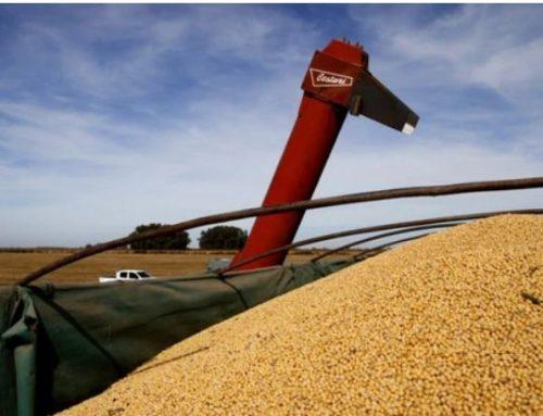 Los cereales y oleaginosas generaron el 43% de los dólares que ingresaron al país