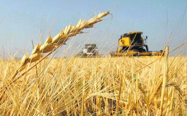 Los números del trigo en plena campaña 18/19