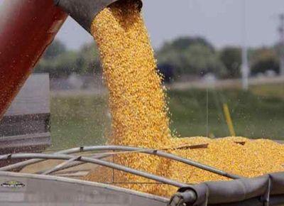 La comercialización favorece al maíz, aunque dudas con la producción brasileña de soja impulsaron su precio